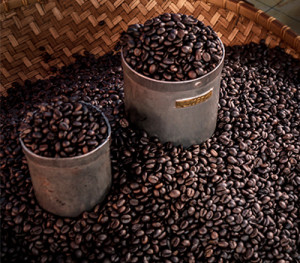 Toraja-coffee